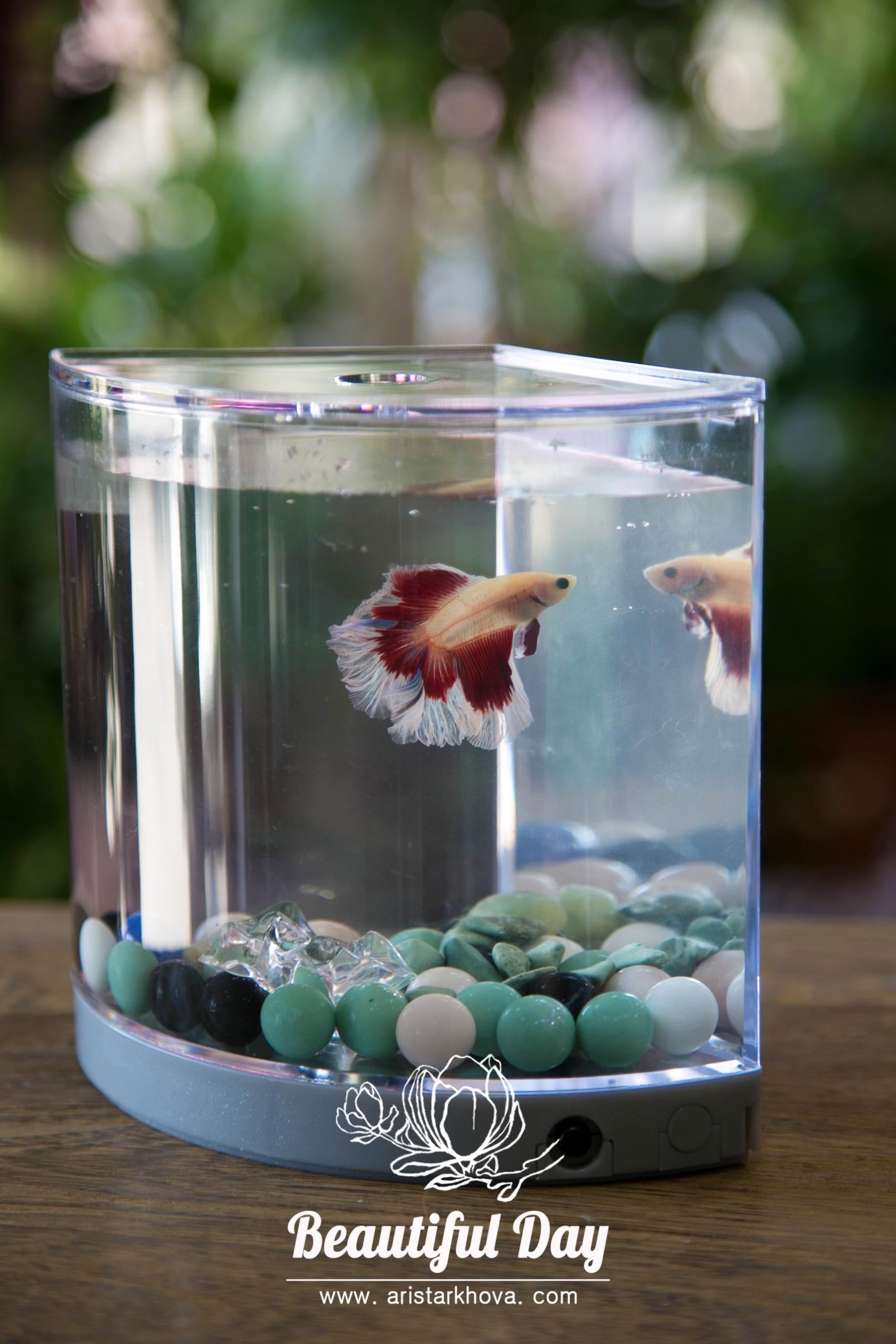 Рыбка в угловом аквариуме